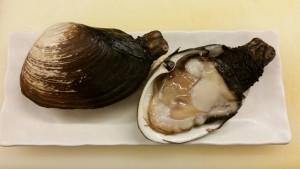 愛知県産本ミル貝